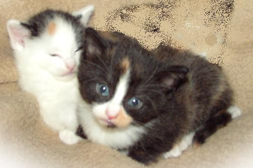 kattenavne til rød hankat